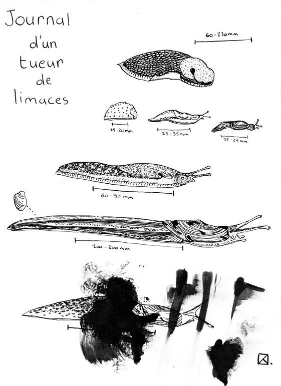 Limaces -V1