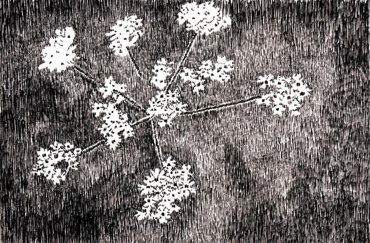Drevo-13